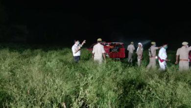 DM leads locust killing