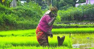 Ordinances to boost agriculture