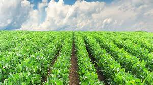 Agri Export increases by 43.4%