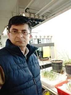 INSPIRE Faculty fellow's engineering to produce heat-tolerant wheat varieties