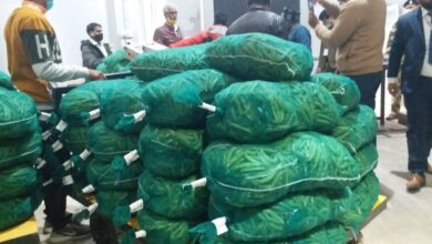 Green vegetables exported to Sharjah
