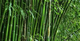 Nitin Gadkari -Bamboo Industry has potential to be worth Rs.30,000 crore