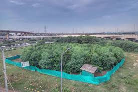 Urban forest spread across 36.225 hectares in Varanasi will help in environmental protection