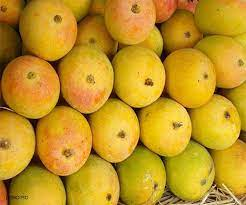 First commercial consignment of GI certified Jardalu mangoes from Bihar exported to United Kingdom